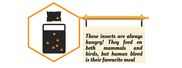 Insect Infestation How Why And When