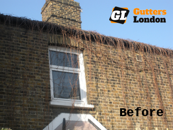 Ivy removal in London