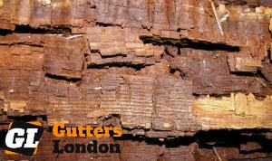 Wood Rotting